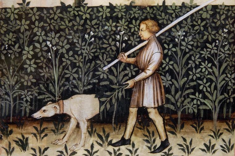 Tacuinum Sanitatis. 14th century. Medieval handbook of health. Lupins. Folio 51v.